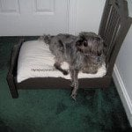 repurposed-chair-dog-bed