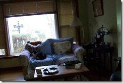 My living room needs help