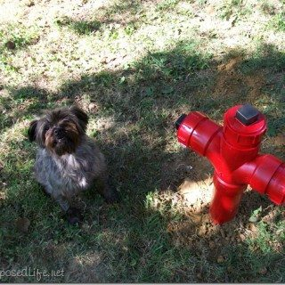 louie's fire hydrant