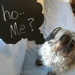 Chalkboard Speech Bubbles (DIY)