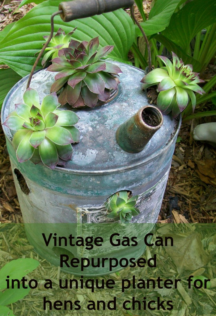 repurposed-gas-can-planter-hens-chicks