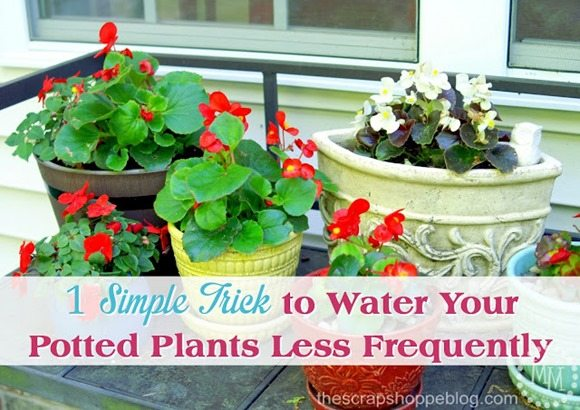 how-to-water-plants-less-frequently