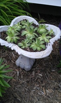 old fountain to succulent planter