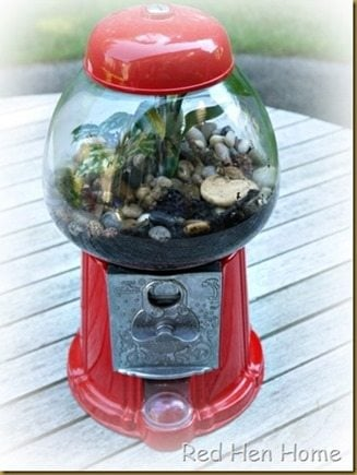 Red Hen Home Gumball Terrarium