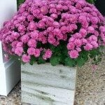 rustic-planter-koozie.jpg
