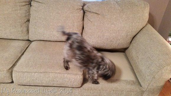 old-dog-new-tricks