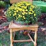 Broken down Chair Planter diy