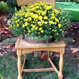 Broken Down Chair Planter