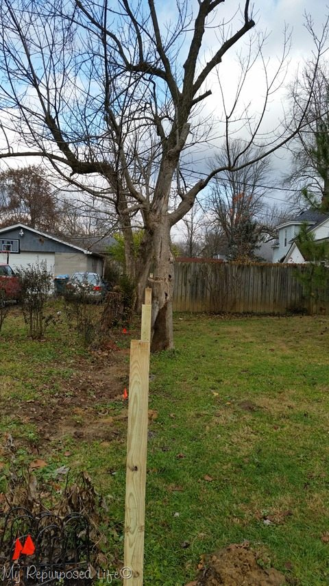 tree-in-fence-line