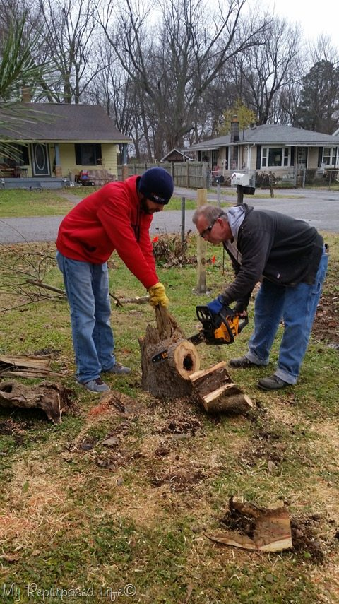 cutting rotted tree stump