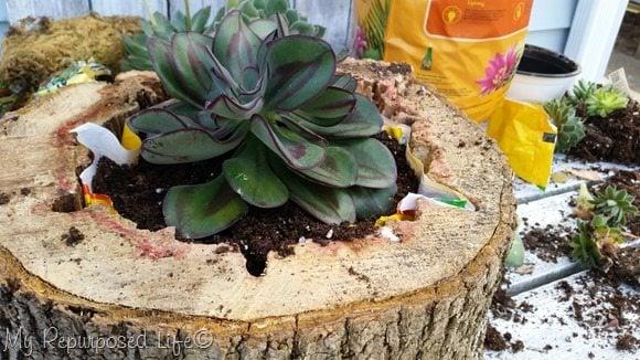 large succulent planter