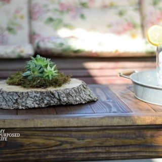 Succulent Planters | rotted tree trunk pieces