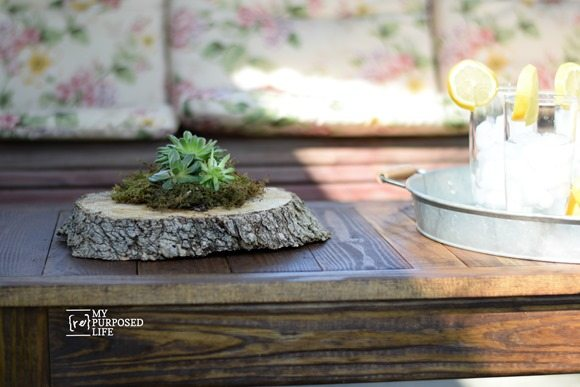 small rustic succulent planter rotted wood tree trunk MyRepurposedLife.com