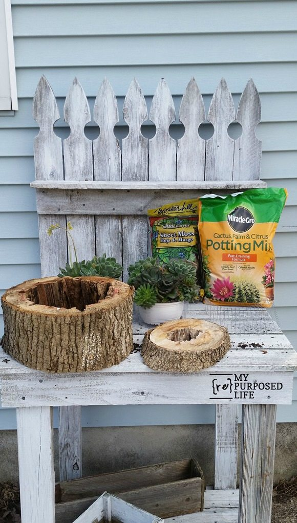 Succulent Planters Rotted Tree Trunk Pieces My