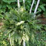 chippy chair planter