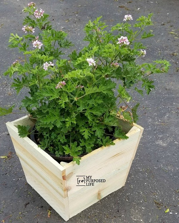 cover ugly plastic flower pot with simple wooden planter box MyRepurposedLife