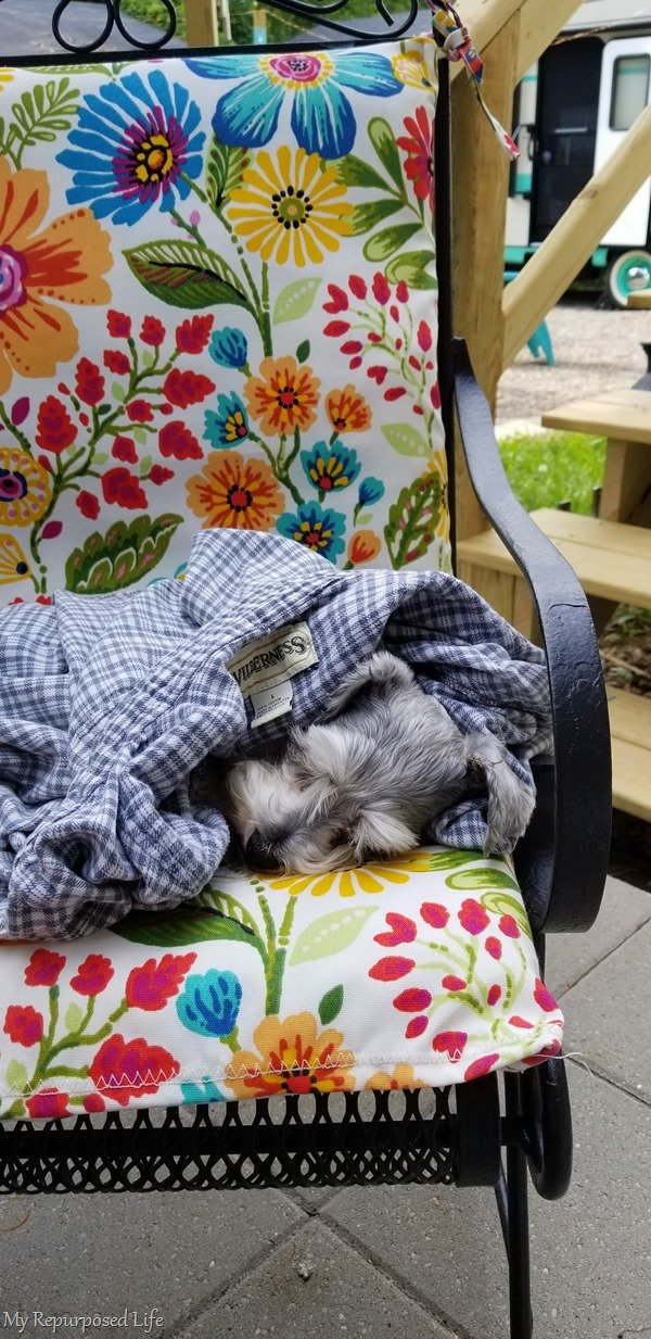 lulu mae chilling on the patio