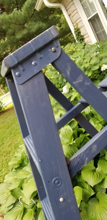 painted ladder as a plant stand