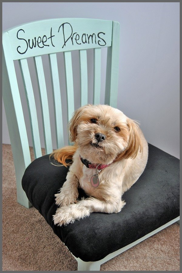 repurposed chair pet bed