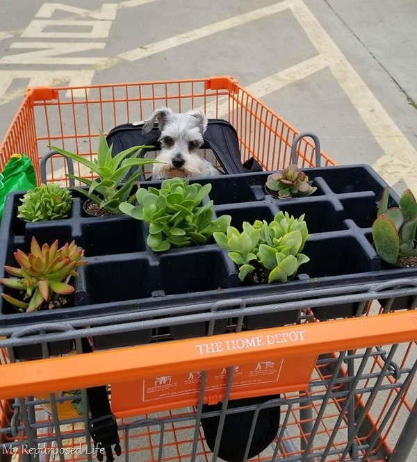 my cute puppy home depot shopping cart with plants