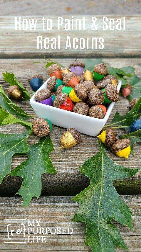 how to paint and seal acorns MyRepurposedLife