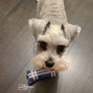 dog with diy flannel toy